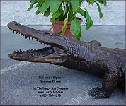 ../Alligator  Life-size